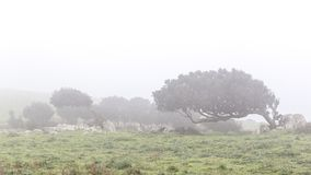 Windswept tress in the fog. Landscape with windswept trees in the fog in Sardinia, Italy royalty free stock photos
