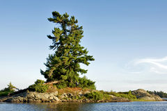 Windswept White Pine. A lonely windswept pine tree on a rocky outcrop in Georgian Bay, Canada stock photography