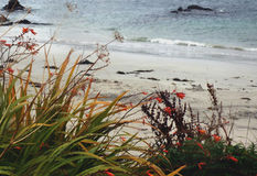 Windswept Wilde Bloemen en Grassen op de Kust van het Eiland van I Stock Fotografie
