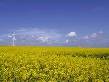 Windturbine auf Rapsfeld stockbilder