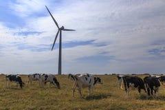 Windturbine en koeien in weide stock fotografie