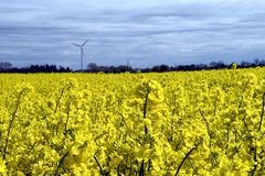 Windturbine, gelbes Feld. Stockfoto