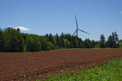 Windturbine in PEI stock foto