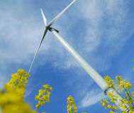 A windturbine into a rape field Royalty Free Stock Photo