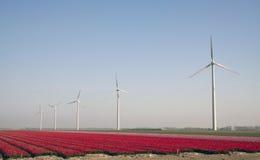 Windturbine and red tulips Stock Photo