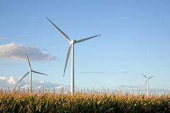 Windturbinen auf dem Maisgebiet Stockfotografie