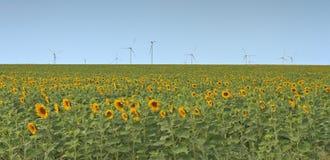 Windturbiner i ett fält Arkivbilder