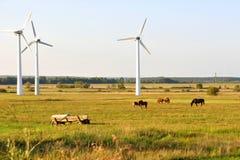 Windturbiner och hästar. Fotografering för Bildbyråer