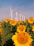Windturbiner och solrosor arkivbild