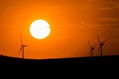 Windturbiner på solnedgången Arkivbild