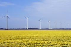 Windturbines в полях цветка в сельской местности от Ne Стоковое Изображение RF
