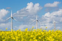 Windturbines behind a yellow coleseed field. Dutch windturbines behind a yellow coleseed field royalty free stock images