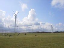 Windturbines en koeienlandschap royalty-vrije stock afbeelding
