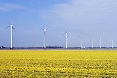 Windturbines in the flower fields in the countryside from the Ne Royalty Free Stock Image