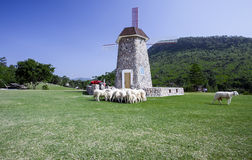 Windwheel tower in sheep farm Royalty Free Stock Photo