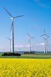 Windwheels и желтый рапс Стоковые Фото