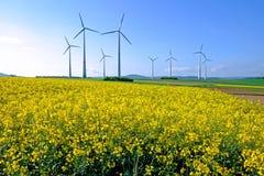 Windwheels и рапс Стоковые Изображения RF