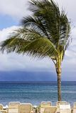 Windy. Palm tree sways on a windy day in the tropics Royalty Free Stock Photos