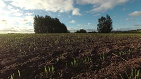 Windy autumn day and crop sprouts on field, time lapse stock video footage