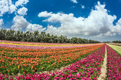 Windy autumn day flower farm Royalty Free Stock Image