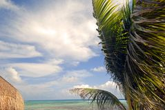 Windy Beach. Palm trees and beach in Mexico Stock Photos
