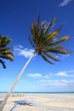 Windy beach in Cuba Royalty Free Stock Photos