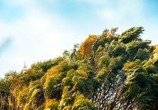 Windy bush Royalty Free Stock Photography