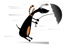 Windy day. Dog tries to hold an umbrella gone with the wind Stock Images