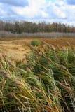 Windy Field. Field in Western New York in Autumn Stock Image
