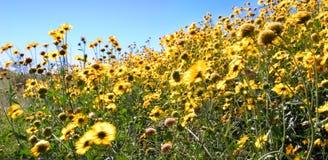Windy Flowers Stock Photo