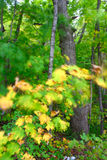 Windy Forest Background Royalty Free Stock Photography