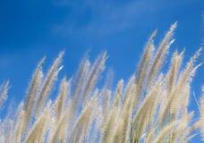 Windy grass field Stock Photo