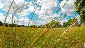 Windy grass in field stock video footage
