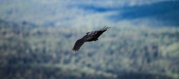 Windy Hunting 2 Royalty-vrije Stock Foto's