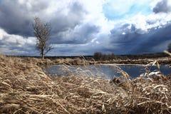 Windy lake shore Stock Images