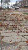 Windy Leaves Foto de archivo