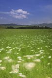 Windy Meadow stock photography