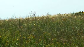 Windy meadow stock footage