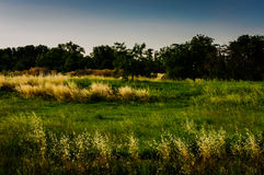 Windy Meadow Landscape Stock Images