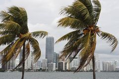 Windy Miami Skyline Royalty Free Stock Photography
