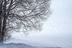 Windy mist in nature. A cold morning in nature and frozen lake. royalty free stock image