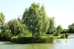 Windy, natural pond with reeds. Great place to fishing or resting in the nature. royalty free stock photo