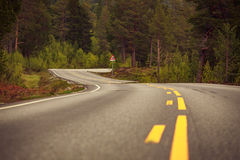 Windy norwegian road. Through the pine forest Stock Photography