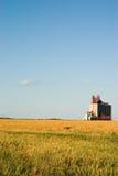 windy pola pszenicy zboża obraz stock