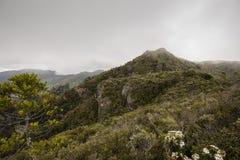 Windy Ridge, Gt. Barrier Island, NZ Royalty Free Stock Photography