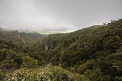 Windy Ridge, Gt. Barrier Island, NZ Stock Image
