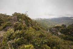 Windy Ridge, Gt. Barrier Island, NZ Stock Photo