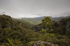 Windy Ridge, Gt. Barrier Island, NZ Royalty Free Stock Image