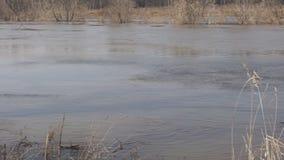Windy river landscape stock video