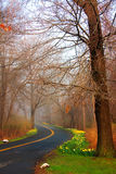 Windy Road. Morning on a windy road with mist in early Spring royalty free stock photos